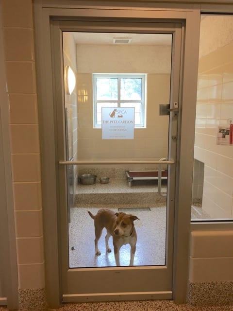 Each dog suite has a window.