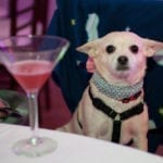 Canine guest enjoys Muttini - Photo by Sparenga Photography