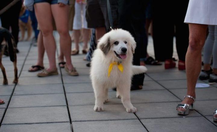 Homeless pup Gandolph