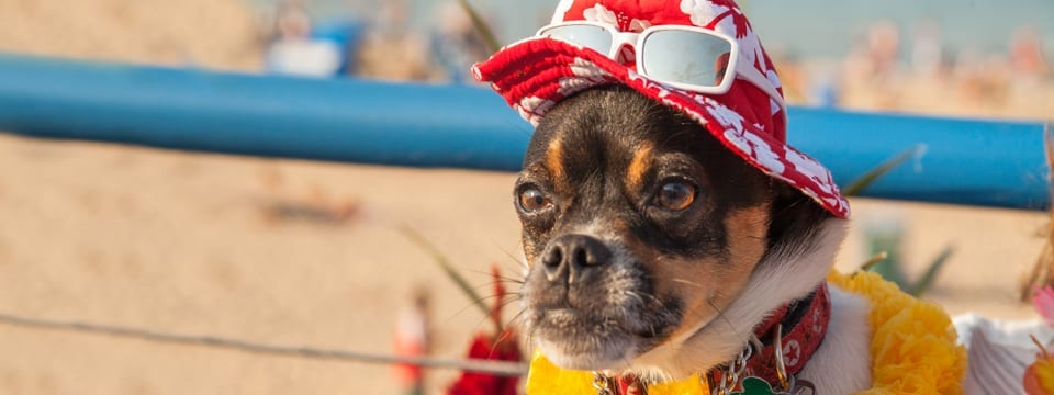 PAWS Chicago's 2015 Beach Party