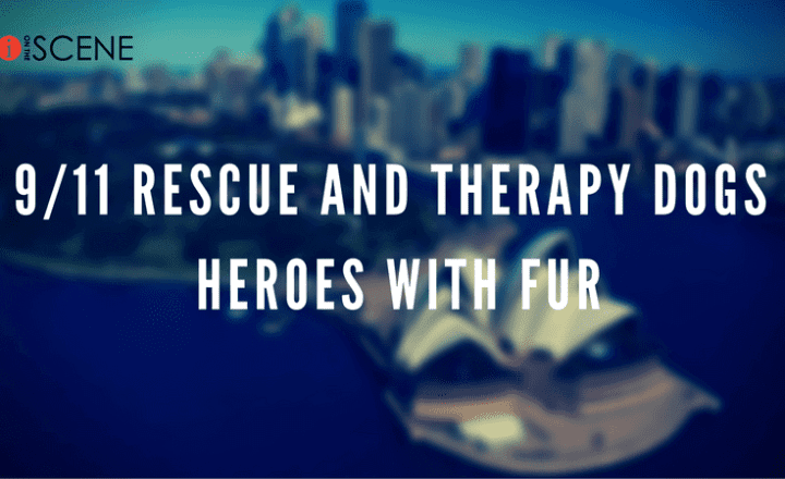 Rescue And Therapy Dogs