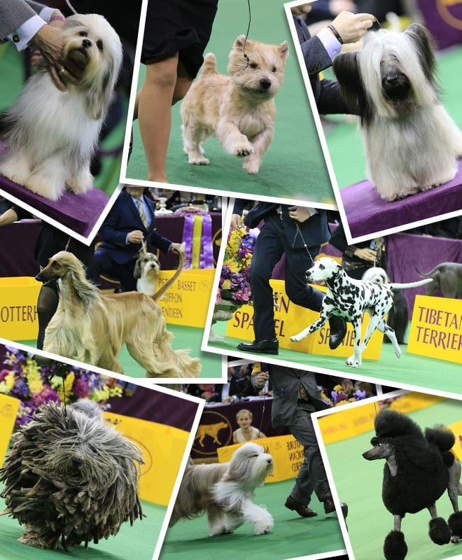 4th_2017dogshow_collage_660x800