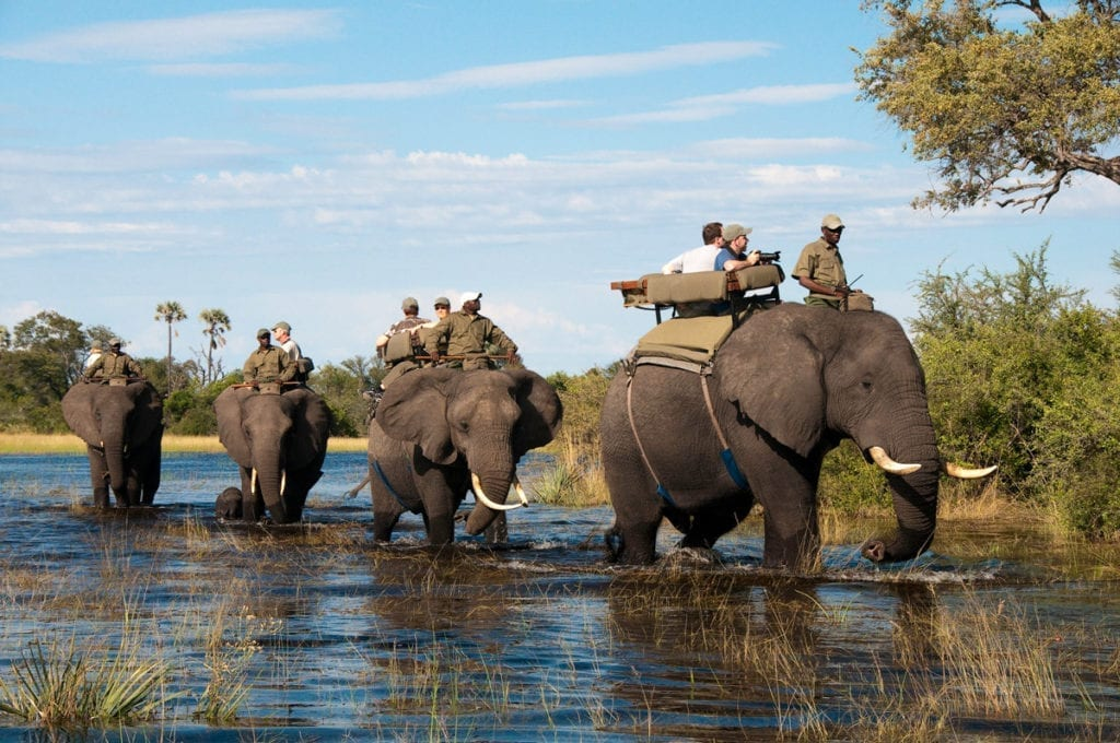 Abu Camp within the Okavango Delta in Botswana