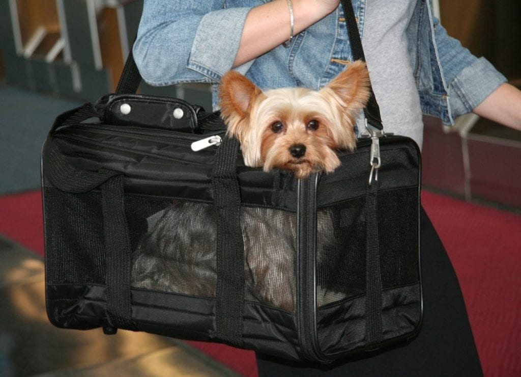 Yorkie travel tips