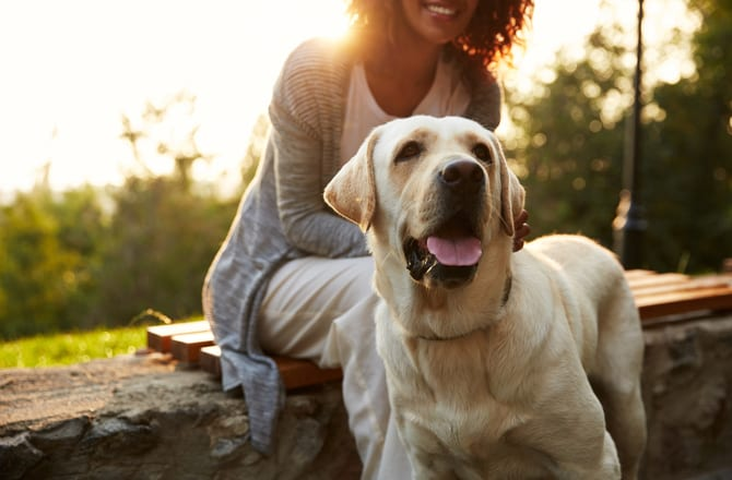 Anti-aging Benefits of Pet Ownership