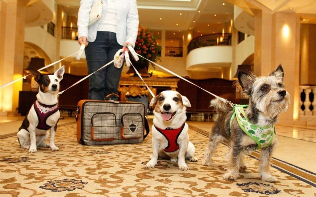 Doga at hotel