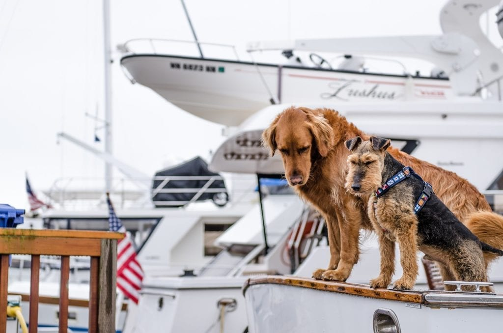 dogs and yachts