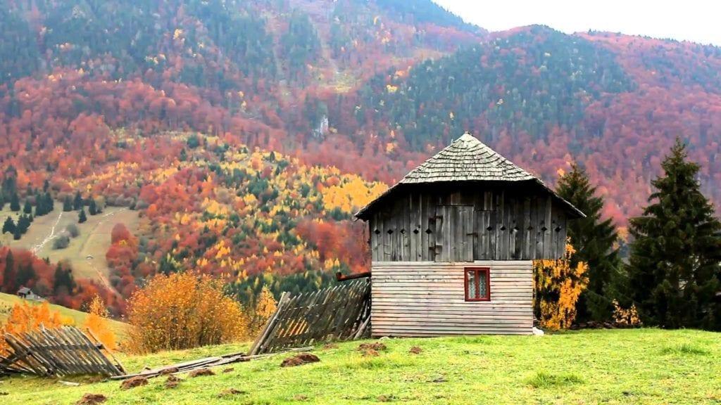 Autumn Brings Beauty