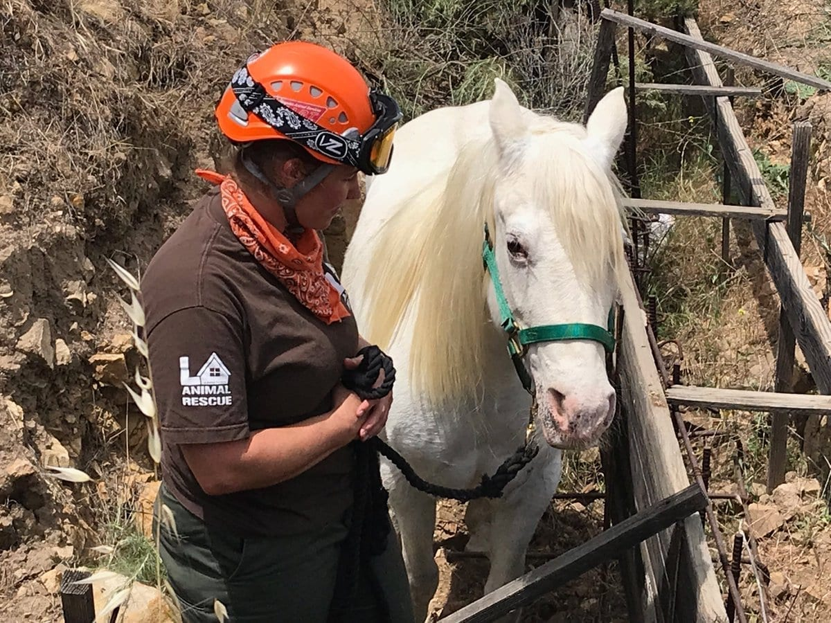 Dozens Of Horses Rescued From California Wildfires