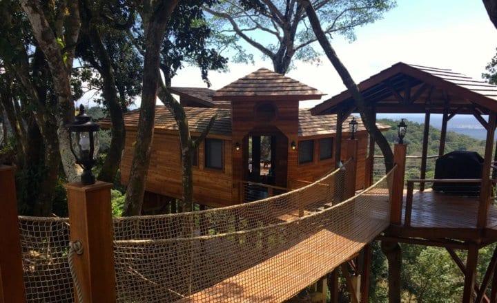 The Tree House Renaissance