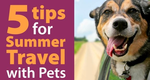 Traveling with your pet during summer