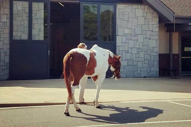 Having an Injured Horse