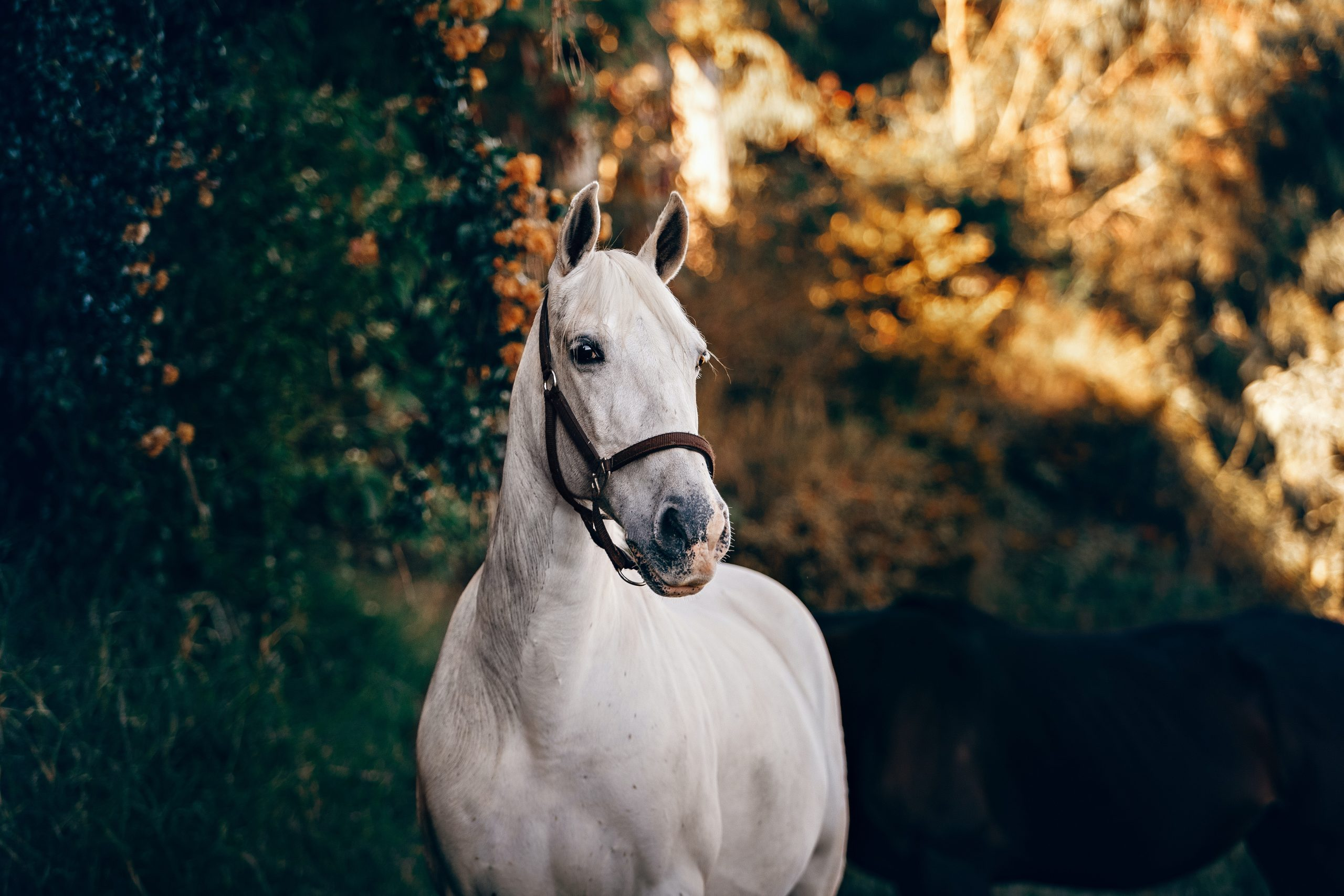 Alternatives to Horse Ownership