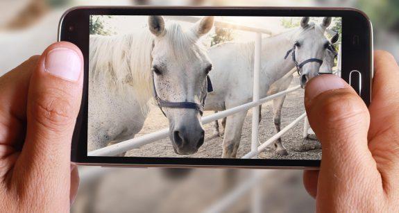 Equestrian Instagram Accounts